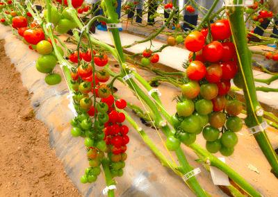 rabita-agrotextil-mallas-agricultura-especialistas