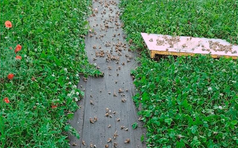 malla caracoles,mallas granjas de caracoles, helitex, malla antifuga, malla dos volantes, filet anti fuite escargots, rete per lumache, rete per allevamento lumache,