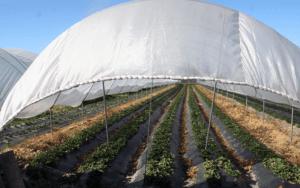 Malla mixta, mixed net, polytunnel covering nets. Cobertura de macrotúneles
