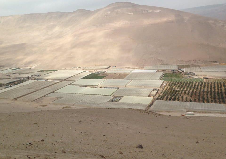 Viaje a Valle Azapa, en la región Arica y Parinacota