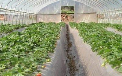 Dan nuevas soluciones en el manejo de los cultivos de invernadero frente al cambio climático