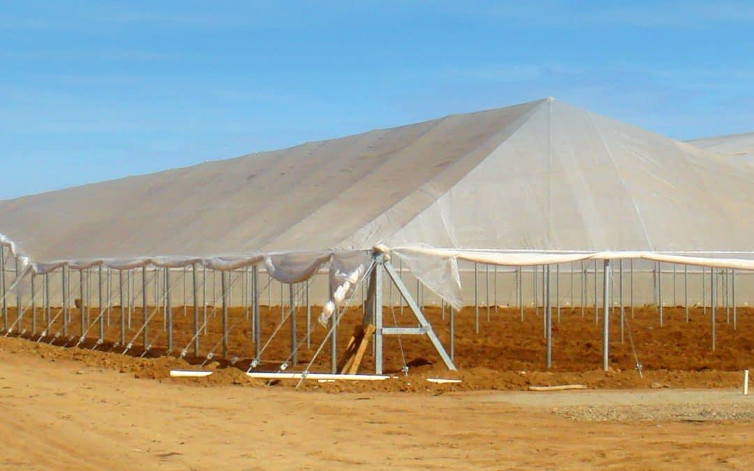 BENEFICIOS DE LA INSTALACIÓN DE MALLAS PARA LA PROTECCIÓN EN LA AGRICULTURA
