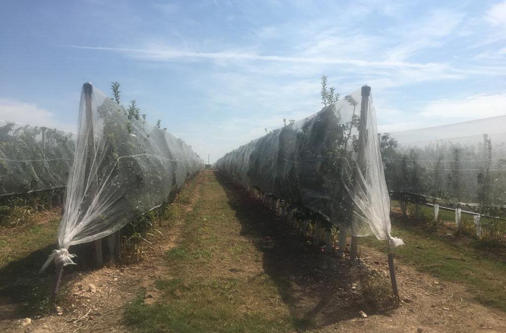 cultivo protegido con mallas antigranizo