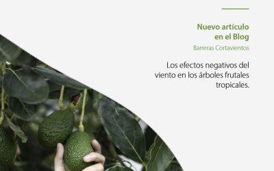 Los efectos negativos del viento en los árboles frutales tropicales