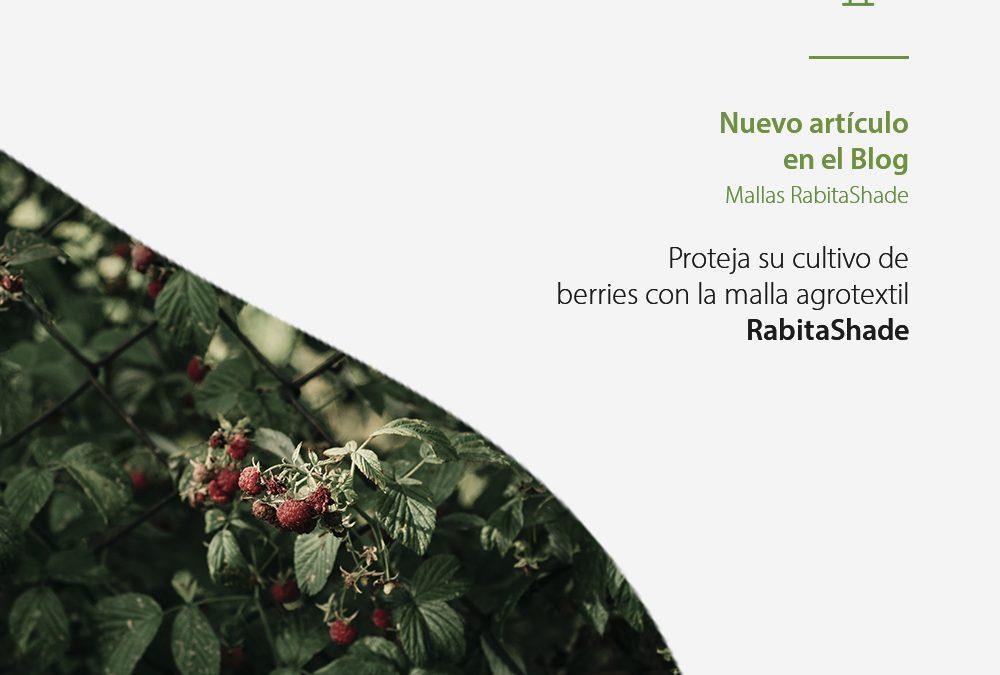 Cómo mejorar la producción del cultivo de berries