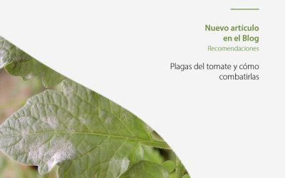 Cuáles son las principales plagas del tomate